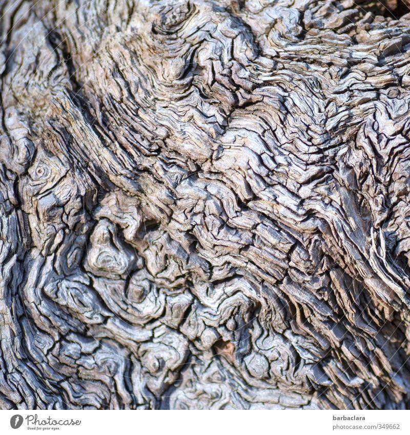 Labyrinth Natur Pflanze Baum Baumwurzel Holz Linie alt außergewöhnlich fantastisch natürlich wild grau ästhetisch bizarr Sinnesorgane Vergänglichkeit Irritation