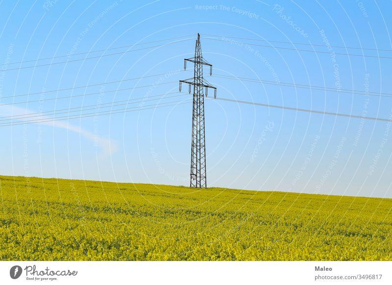 Strommasten in einem blühenden Rapsfeld Elektrizität Feld gelb Ackerbau Energie Landschaft Natur Pflanze Pylon Blüte Kabel Himmel Industrie Kraft blau Ernte