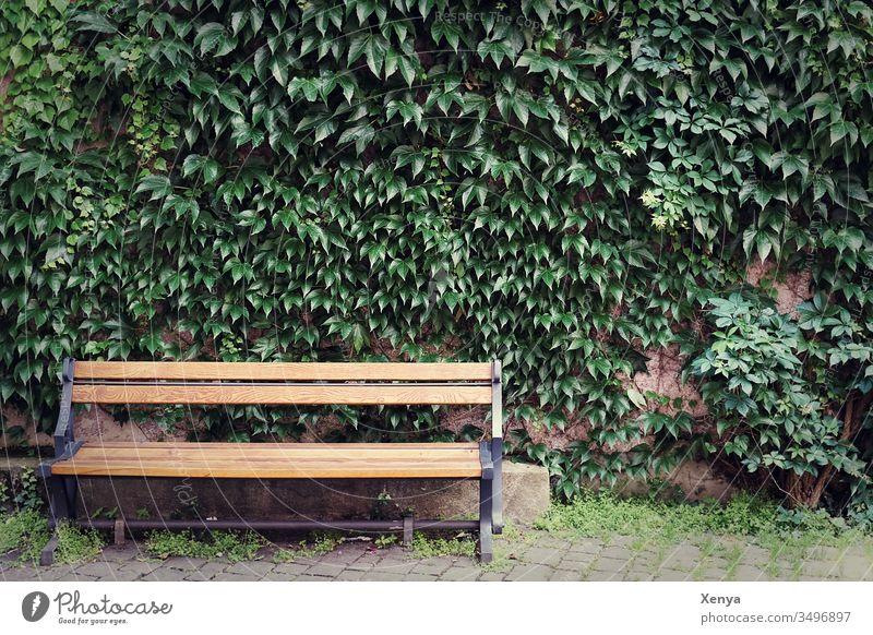 Leere Parkbank leer unbestetzt Bank Menschenleer Tag ruhig Einsamkeit Sitzgelegenheit Holz Holzbank Farbfoto Außenaufnahme Textfreiraum oben Pause Erholung
