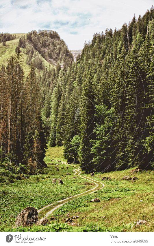 Im Frühtau zu Berge Ferien & Urlaub & Reisen Berge u. Gebirge wandern Landschaft Pflanze Himmel Wolken Sommer Baum Gras Fichte Tanne Wald Hügel Alpen