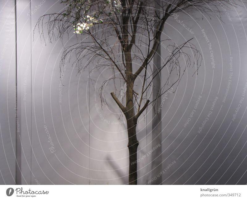 schattiges Plätzchen Natur Pflanze Baum stehen verblüht dehydrieren dünn kaputt natürlich trocken braun grau Gefühle Überleben Stadt Ast vertrocknet Farbfoto