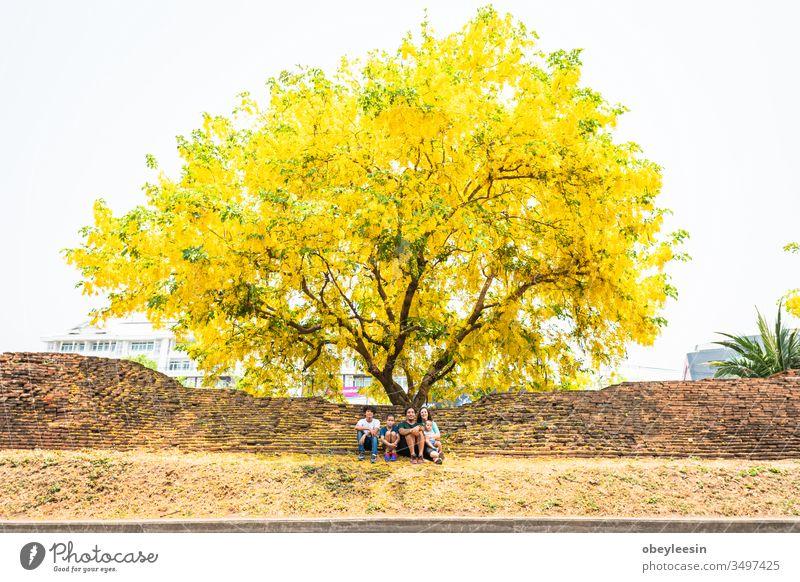 Familie sitzt unter einem riesigen gelben Handroanthus-Chrysanthus-Baum in voller Blüte Silhouette Erwachsener männlich Rücken MEER Papi Gesundheit Umarmung