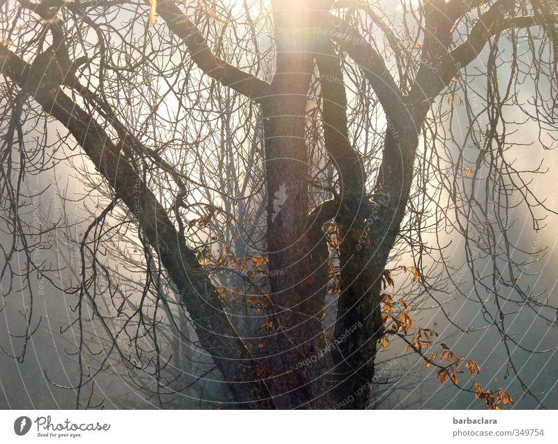 Magisches Licht Sonne Sonnenlicht Herbst Baum leuchten verblüht dehydrieren dunkel fantastisch hell Gefühle Stimmung Hoffnung Natur Sinnesorgane Trauer