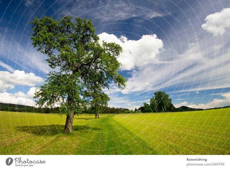 tree Umwelt Natur Landschaft Pflanze Luft Himmel Wolken Horizont Frühling Wetter Schönes Wetter Wärme Baum Gras Blatt Grünpflanze Wiese Feld Wald Hügel blau