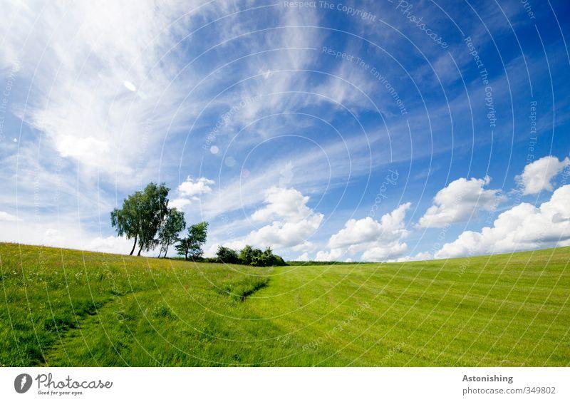 am Horizont Umwelt Natur Landschaft Pflanze Luft Himmel Wolken Frühling Wetter Schönes Wetter Wärme Baum Blume Sträucher Blatt Grünpflanze Wiese Feld Hügel blau
