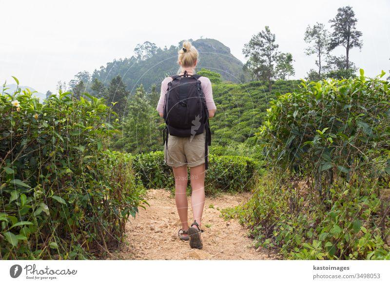Weibliche Touristin genießt die schöne Natur der Teeplantagen, Sri Lanka. Abenteuer Frau frei Trekking reisen Schonung Landschaft Bahn Person Sommer asiatisch