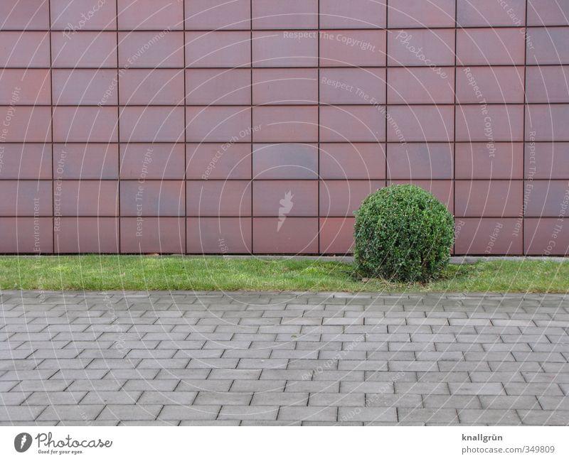 Solitär Natur Pflanze Sträucher Grünpflanze Buchsbaum rund Stadt braun grau grün Gefühle Ordnungsliebe Einsamkeit Rasen Fassade Fassadenverkleidung Grünstreifen