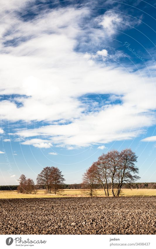 in brandenburgs wald und flur. Baum Baumreihe Acker Feld Landschaft Außenaufnahme Natur Umwelt Himmel Menschenleer Farbfoto grün blau Textfreiraum oben Wiese