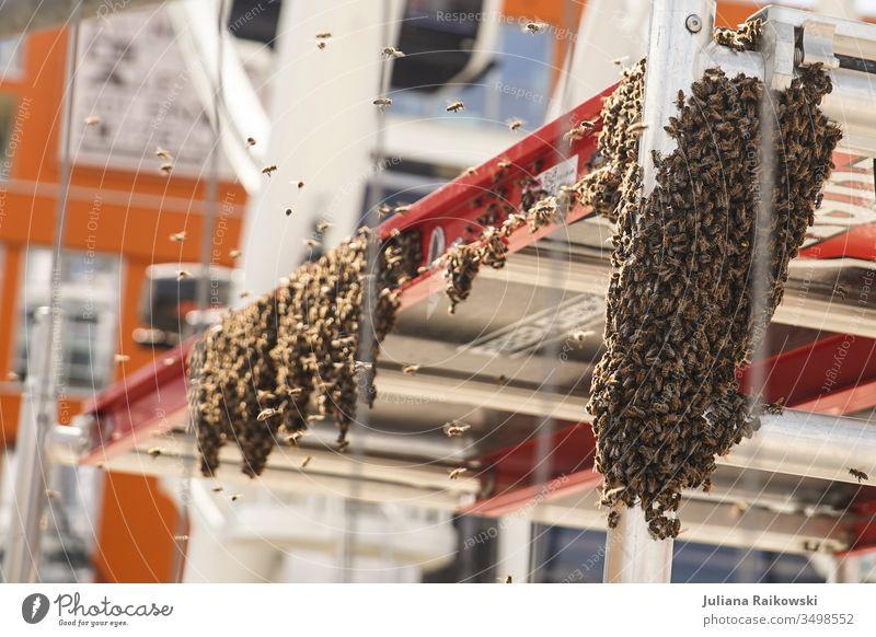 Sehr viele Bienen auf einer Baustelle Bienenstock Außenaufnahme Natur Imker Insekt Honigbiene Sommer Kolonie Schwarm fliegen Summen natürlich Tier Aussterben