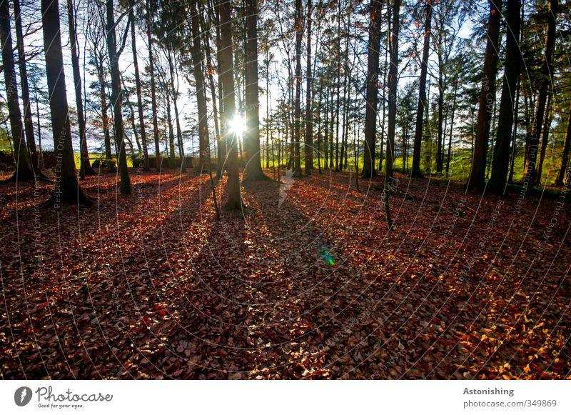 die Sonne blickt in den Wald Umwelt Natur Landschaft Pflanze Himmel Horizont Sonnenaufgang Sonnenuntergang Sonnenlicht Frühling Wetter Schönes Wetter Wärme Baum