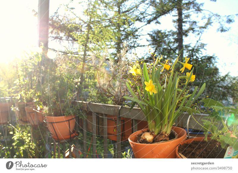 stay home. Balkon Balkonpflanze Gartenarbeit Erde Gartenarbeit machen Gärtner Pflanzen Tontopf sonnig grün braun Terrakotta Natur Frühling Nahaufnahme Stil