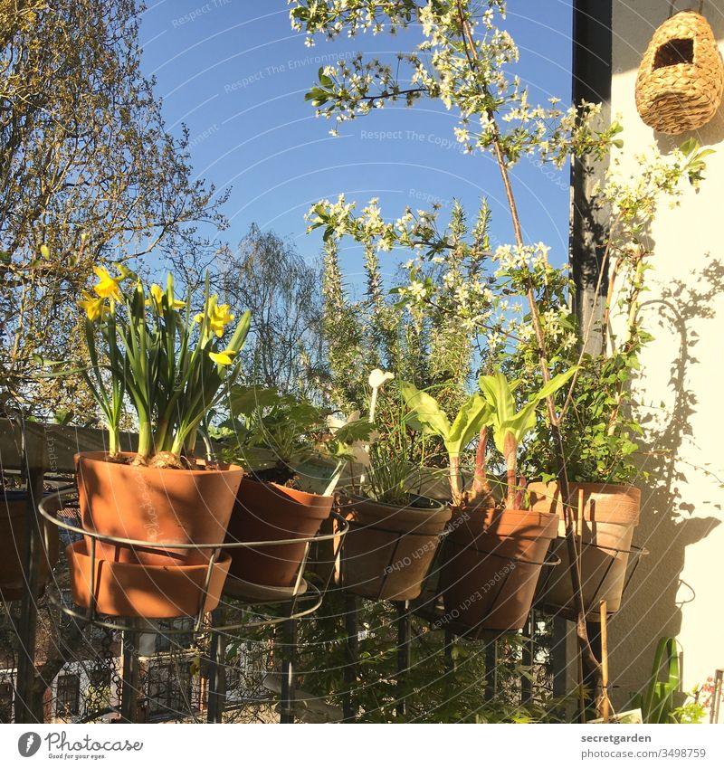 Erinnerung an eine sorglose Zeit (2019) Froschperspektive Vogelhaus zuhause relaxen Kirschbaum Kirschblüten Umwelt Balkongeländer Wachstum balkonbrüstung