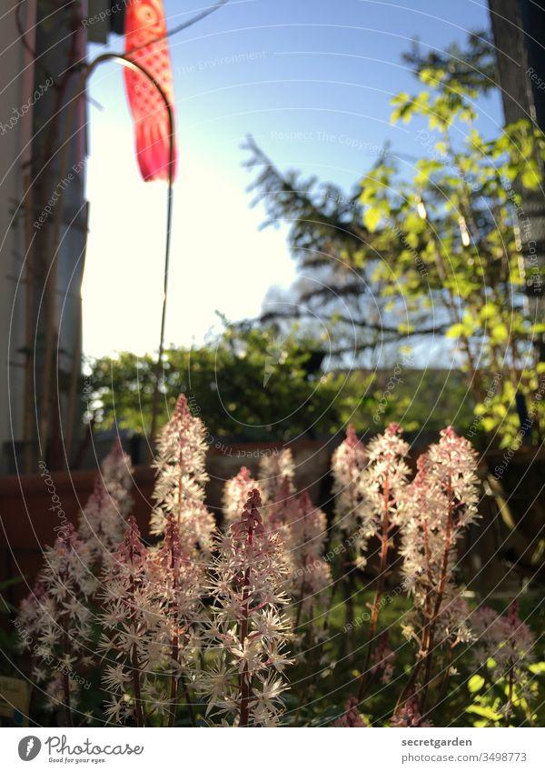 Koinobori. Balkon Balkonpflanze Gartenarbeit Erde Gärtner Pflanzen sonnig grün braun Natur Frühling Nahaufnahme Stil Außenaufnahme Sommer Freizeit & Hobby