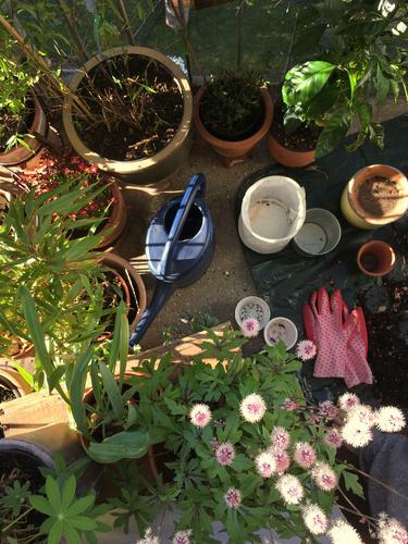 Tag der Arbeit. Balkon Balkonpflanze Gartenarbeit Erde schaufeln Handschuh Gartenarbeit machen Gärtner Pflanzen Tontopf rosa sonnig grün braun Terrakotta