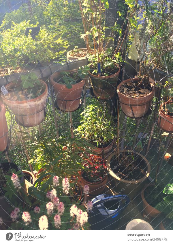 Man sieht vor lauter Pflanzen den Balkon nicht mehr. Balkonpflanze Gartenarbeit Gartenarbeit machen Gärtner Tontopf sonnig grün braun Terrakotta Natur Frühling