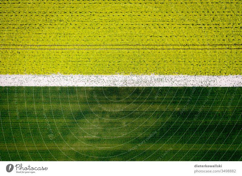 Rapsfeld Landwirtschaft Rapsblüte Natur Rapsanbau Tag Nutzpflanze Feld indutrielle Landwirtschaft Futter Nahrung Umwelt Flora Luftaufnahme Drohne grün gelb
