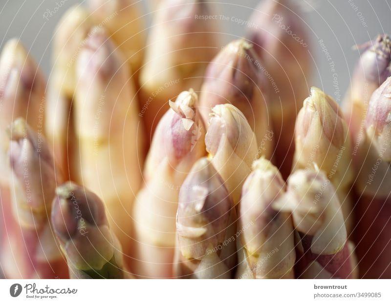 Weiße Spargelköpfe, Nahaufnahme. Spargelkopf Gemüse Gesunde Ernährung Frühling weiß purpur Lebensmittel Vitamin Ernte fettarm Licht