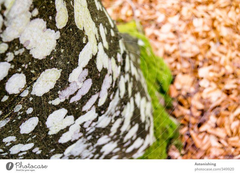 gepunktet Umwelt Natur Landschaft Pflanze Erde Baum Wald Holz stehen grün rot schwarz weiß Punkt Moos Flechten Blatt Baumrinde Baumstamm Farbfoto mehrfarbig