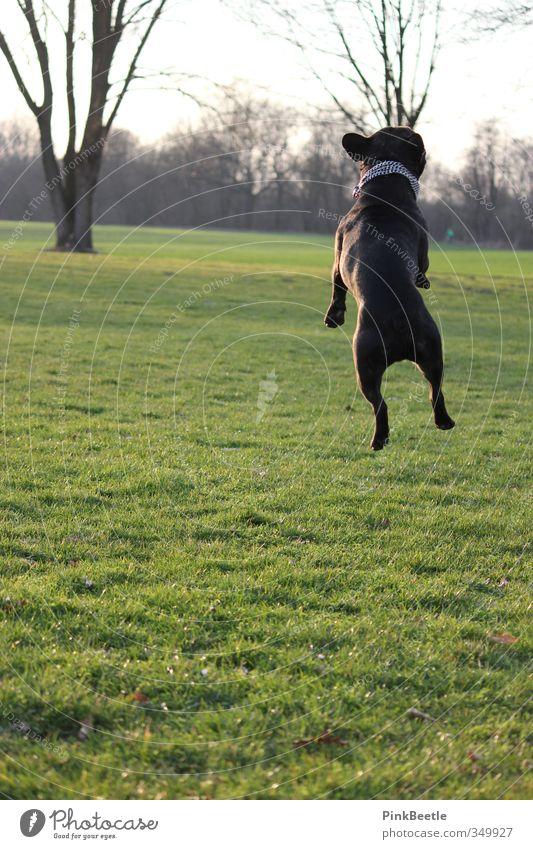 Up in the air Hund Natur schön grün Freude Tier Umwelt Wiese Bewegung lustig Glück springen Stimmung frei hoch Fröhlichkeit