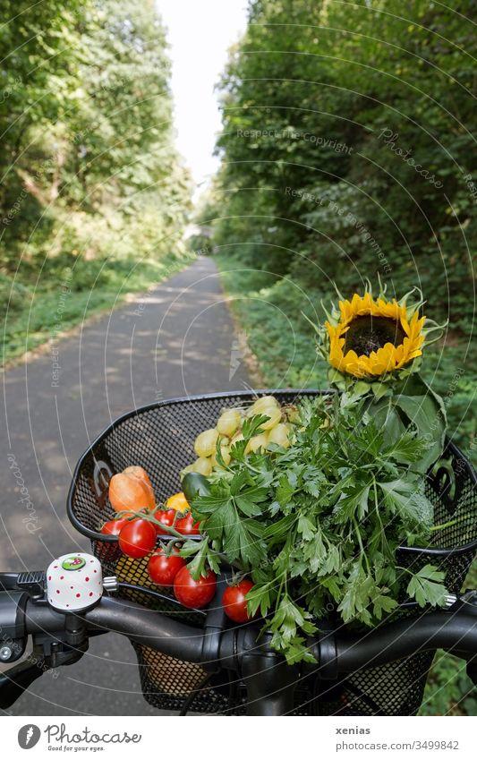 Fahrrad fahren - Moderner und gesunder Transport von Gemüse, Obst und Sonnenblume im Fahrradkorb Fahrradweg Verkehrswege Fahrradfahren Mobilität Einkauf Rad