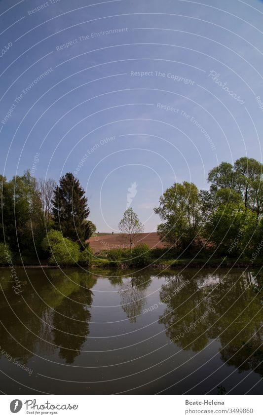 Landschaft mit einzelnem zentriertem Baum spiegelt sich bei blauen Himmel im Wasser Szenerie Idylle Schönheit Natur Einzelbaum Baumgruppe Wald See Spiegelung