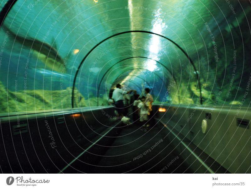 Haie rund Tunnel Aquarium Sehenswürdigkeit Unterwasseraufnahme Haifisch Besucher Glasscheibe faszinierend Fototechnik Acryl Glasdach Verglasung