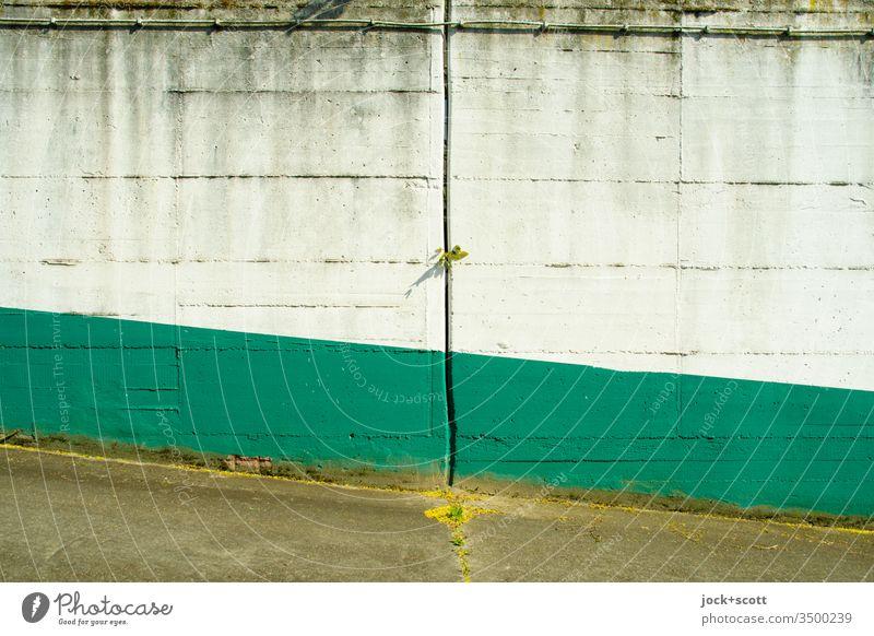 Öde farbige Betonmauer mit Spalte  durch welches sich ein bisschen grün durchmogelt. grau weiß Pflänzchen Gedeckte Farben Rampe Detailaufnahme