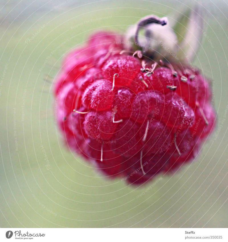Erste Himbeere Lebensmittel Frucht Dessert Ernährung Vegetarische Ernährung Vegane Ernährung Natur Sommer Pflanze Nutzpflanze Wildpflanze Himbeeren Beeren