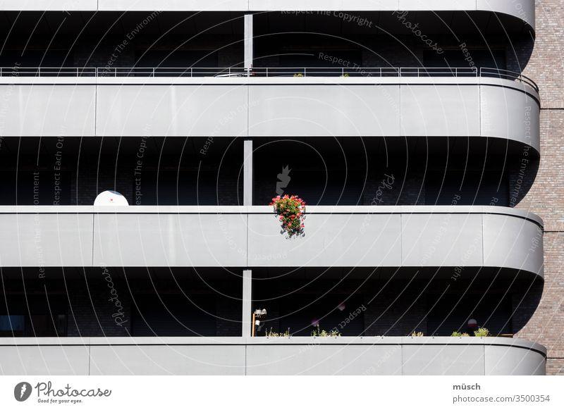 Balkonblumen Blumen Satellit Streifen Hochhaus Wohnung Einsamkeit Menschen Wärme Verbindung Klarheit Struktur Schatten Architektur Fassade Leere Stadt