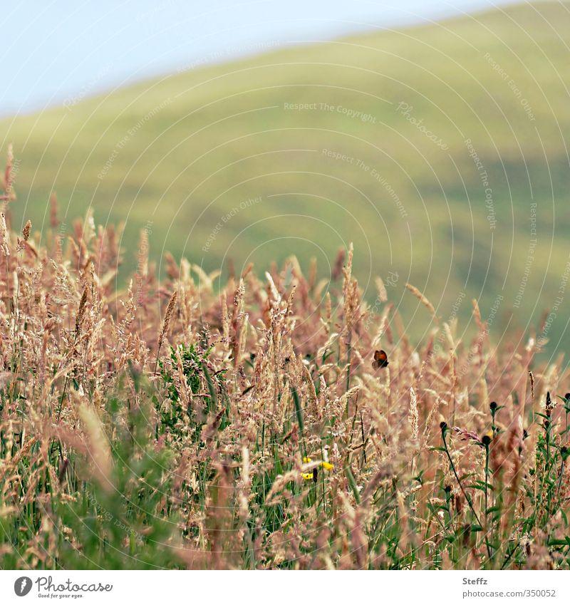 Sommer im Norden Natur Pflanze Landschaft Erholung ruhig Tier Umwelt Gras Wetter Freizeit & Hobby Klima Schönes Wetter Hügel Insekt Schmetterling