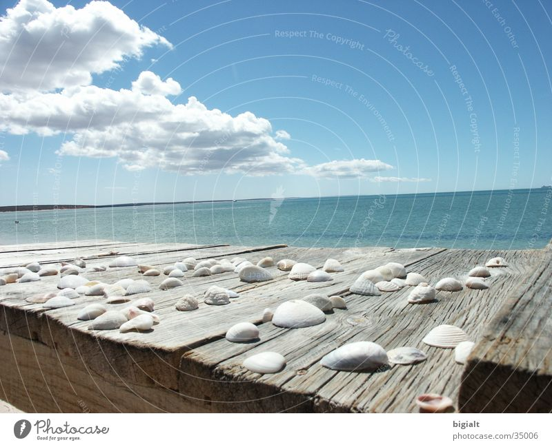 Meer Himmel Strand Ferien & Urlaub & Reisen Einsamkeit Muschel