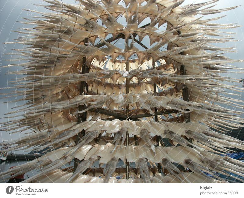 Trockenfisch Meer Ernährung Asien China Fischereiwirtschaft Lebensmittel Tintenfisch