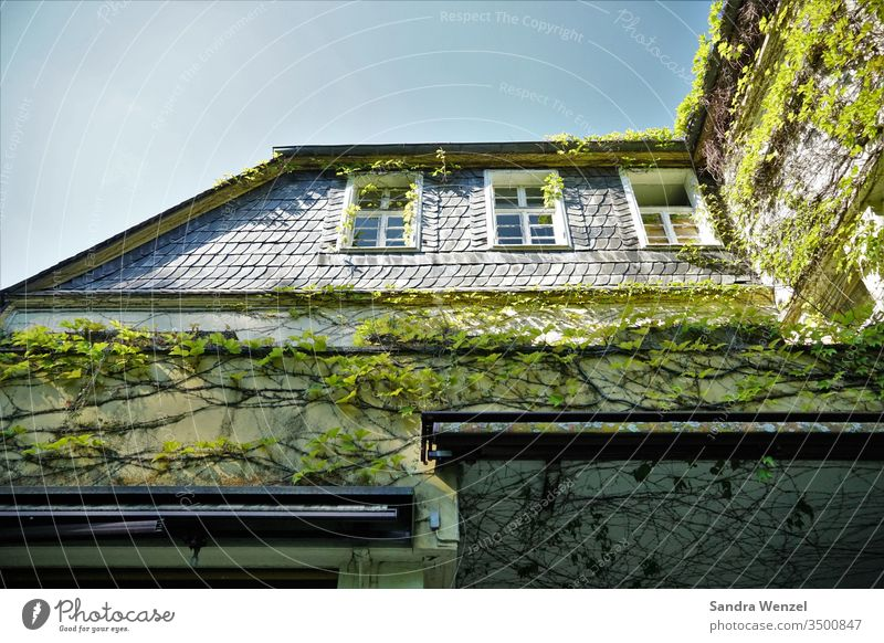 Alte Villa Haus Spukhaus Ruine zerfall zerfallprozess witterung verwahrlost schrottimmobilie Efeu Schiefer Mauerwerk Fassade alt vergammelt erbschaft erbe