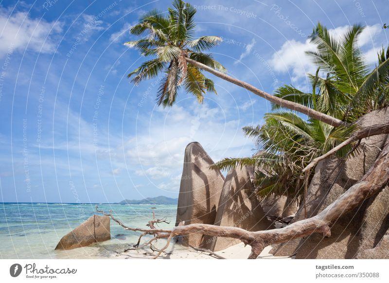 LA DIGUE, SEYCHELLES Natur Ferien & Urlaub & Reisen Meer Erholung ruhig Strand Reisefotografie Sand natürlich Idylle Postkarte Paradies Afrika himmlisch Palme