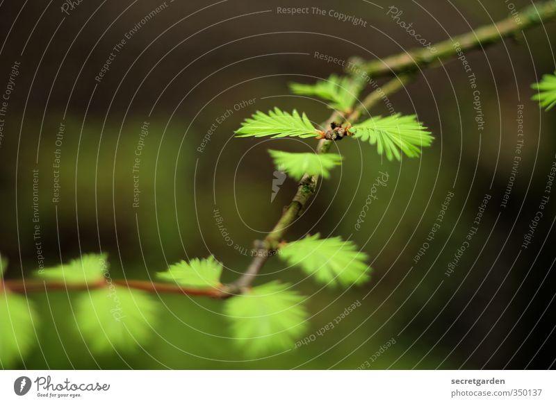 nature: cheaper than therapy... Umwelt Natur Tier Frühling Pflanze Baum Sträucher Grünpflanze Garten Park Wachstum braun grün zartes Grün Jungpflanze verträumt