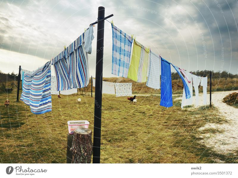 Trockene Tücher Wäsche Waschtag Wäscheleine Textilien hängen nass trocknen Handtücher wedeln Wind Wäscheklammern Wiese Himmel Wolken draußen Außenaufnahme