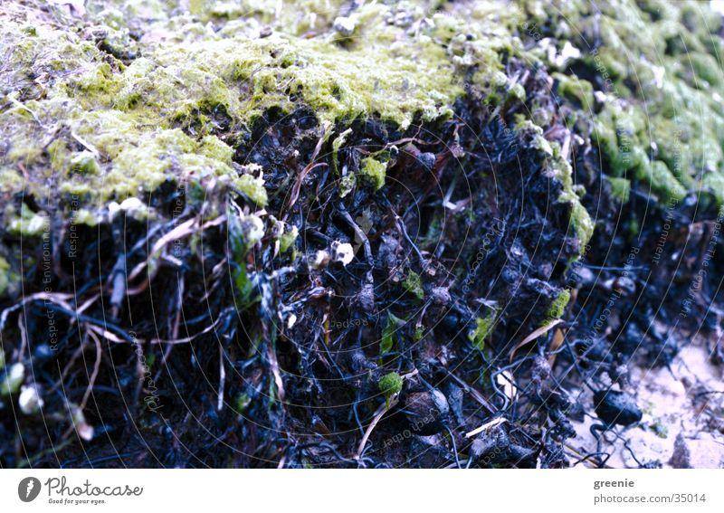 Algen grün braun Strand Schlamm Erde Wasser Nahaufnahme