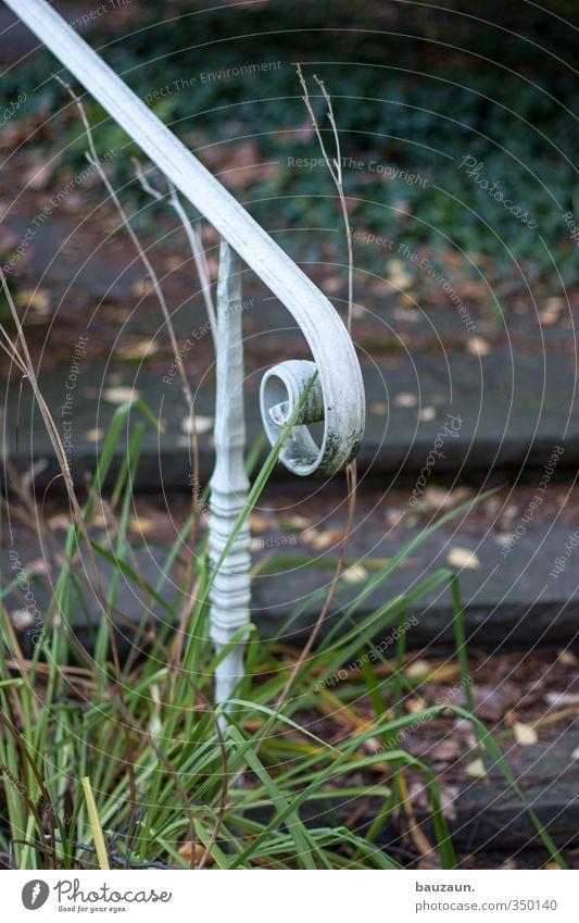 schnörkel. Natur grün weiß Pflanze Blatt Wege & Pfade grau Stein Garten natürlich Metall gehen Park Wohnung Treppe Sträucher