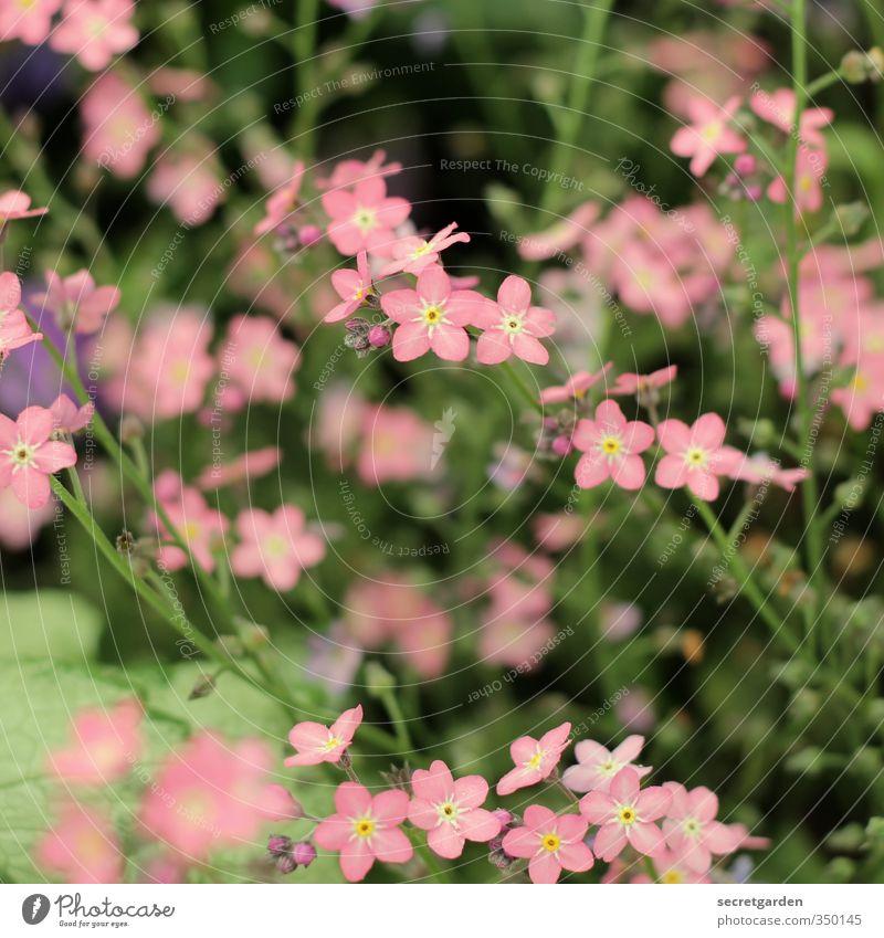 so muss sommer. Gartenarbeit Umwelt Natur Pflanze Frühling Sommer Blume Sträucher Blüte Park Blühend Duft Farbfoto mehrfarbig Außenaufnahme Nahaufnahme
