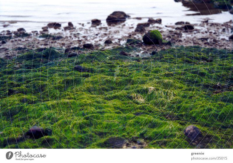 Ostseestrand_2 Strand Meer Algen grün Wasser Stein
