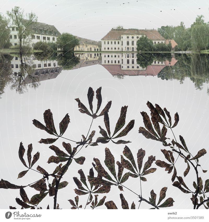 Königswartha 180° See Park Schloss vornehm Himmel bedeckt windstill Reflexion & Spiegelung Wasseroberfläche Spiegelbild 1:1 symmetrisch Symmetrie Blätter Zweige