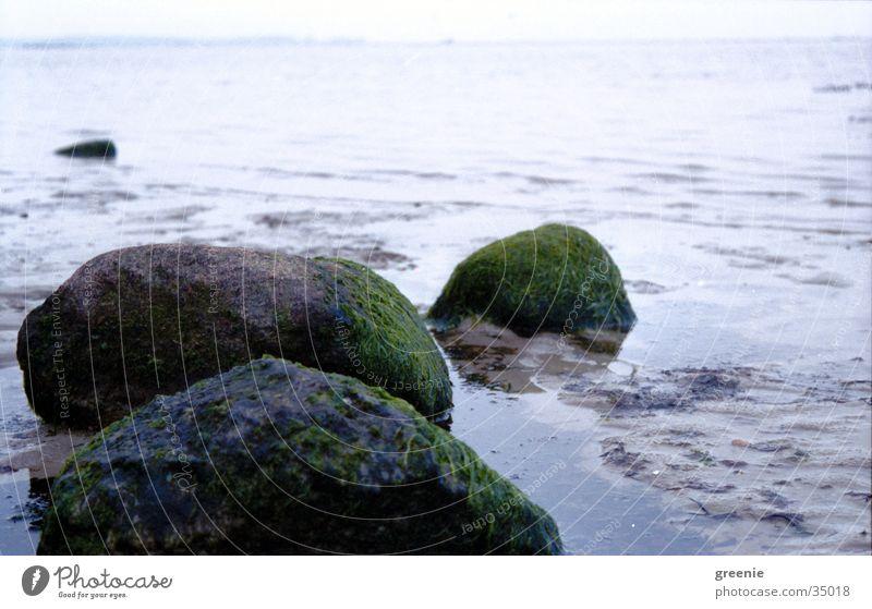 ostseestrand_1 Algen Strand Meer ruhig nass Stein Wasser Erde Sand Nahaufnahme