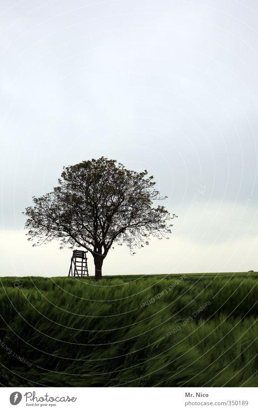 kwerfeldein Umwelt Natur Landschaft Himmel Wolken Klima Pflanze Baum Feld grün Hochsitz Ernte Getreide Landwirtschaft Forstwirtschaft Einsamkeit Wind ruhig Jagd