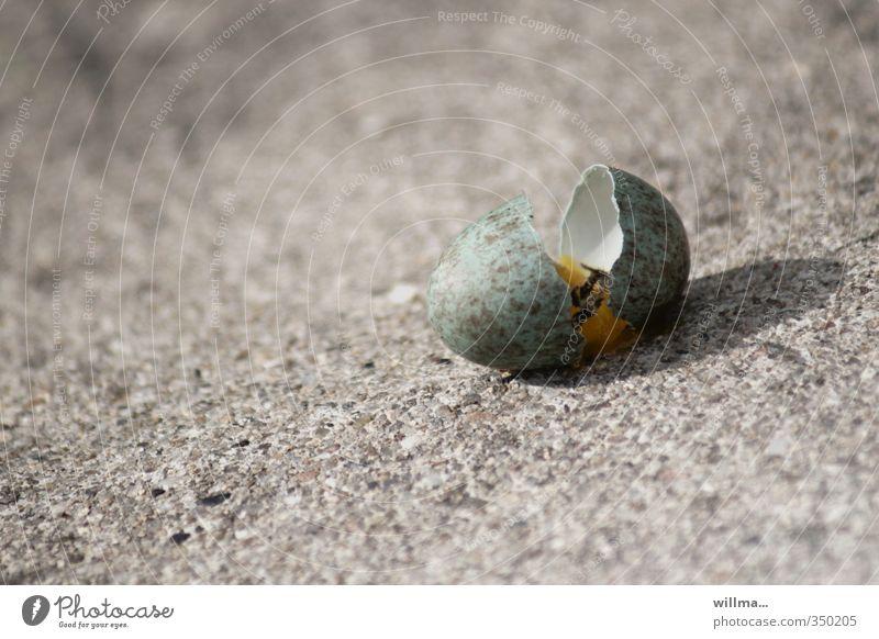 verlierer grün Leben Tod grau Stein Sand kaputt Ei gebrochen verloren Überleben Misserfolg Hoffnungslosigkeit Eierschale Vogeleier