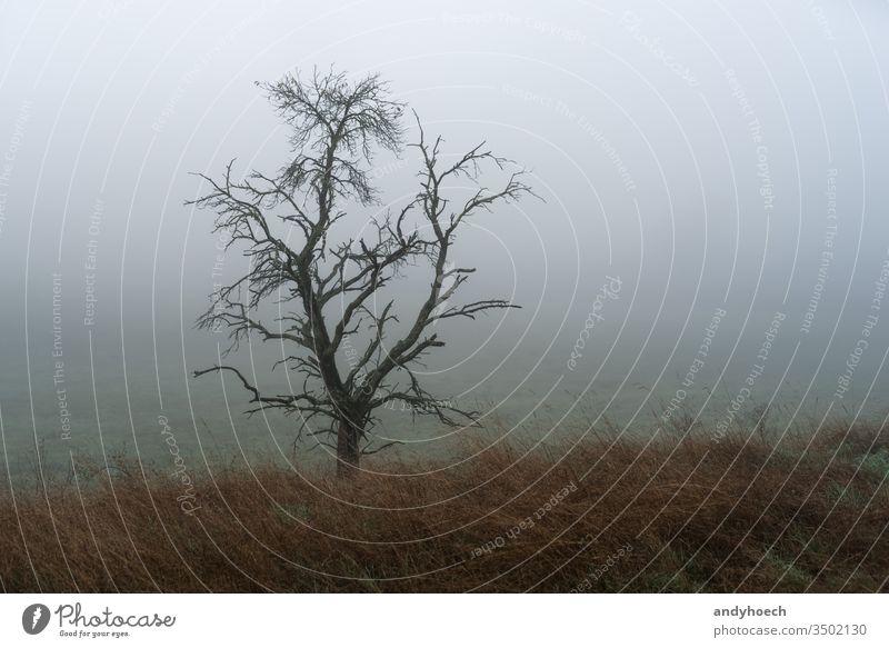 Einzelbaum mit Wiese im Vordergrund und Nebel allein Herbst Hintergrund schön Schönheit Ast kalt farbenfroh Land Landschaft Tag dramatisch früh fallen Feld