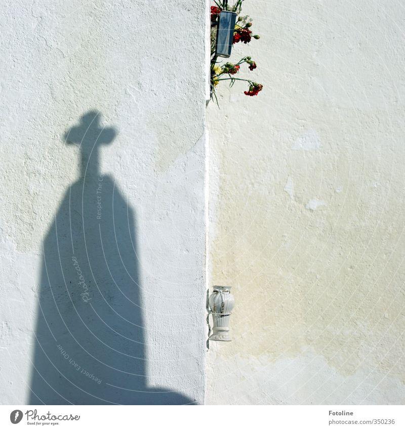 Licht und Schatten weiß Blume schwarz Blüte hell Christliches Kreuz Friedhof Grab Grabstein Grabmal