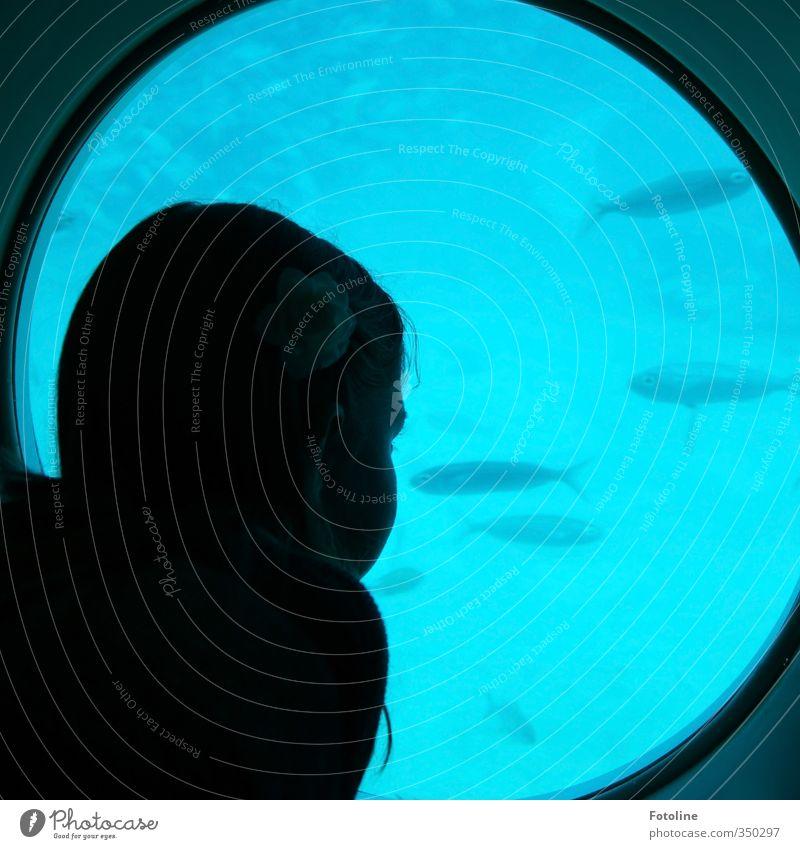 total blau | und spannend Mensch feminin Kind Mädchen Kopf Haare & Frisuren 1 Wasser Tier Fisch Schwarm kalt beobachten Bullauge U-Boot Farbfoto mehrfarbig