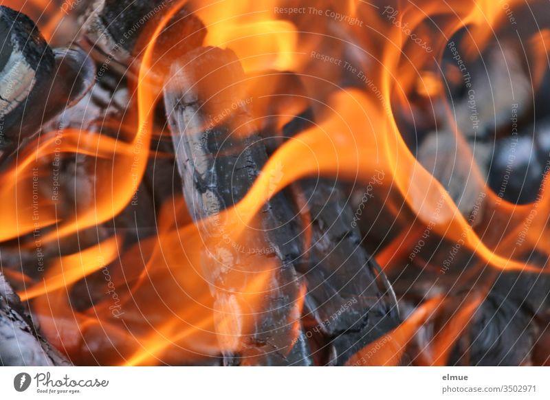 lodernde Flammen von brennendem Holz in einer Feuerschale heiß Brand verbrennen gefährlich anzünden Physik zündeln Verkohlung Asche orange Feuerteufel Gefahr