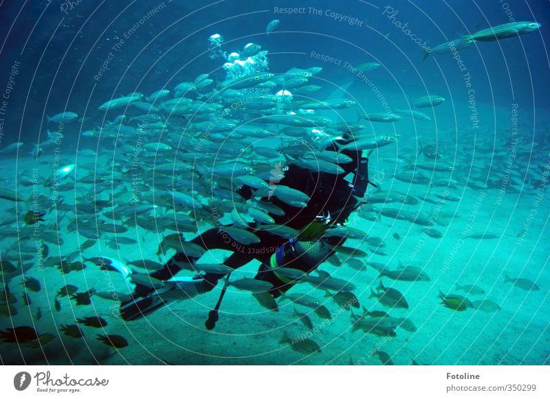 total blau | Unterwasserwelt Wasser Meer Tier kalt natürlich nass Urelemente Fisch tauchen Schwarm Taucher