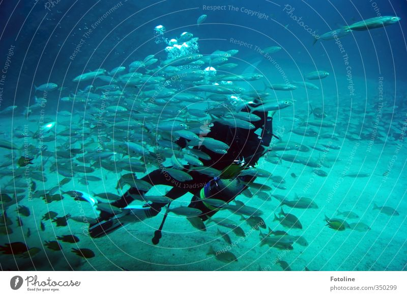 total blau | Unterwasserwelt Urelemente Wasser Meer Tier Fisch Schwarm kalt nass natürlich Taucher tauchen Unterwasseraufnahme Farbfoto mehrfarbig